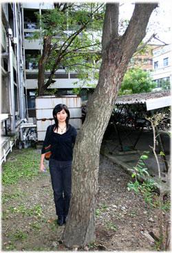 工芸高校の漆の木