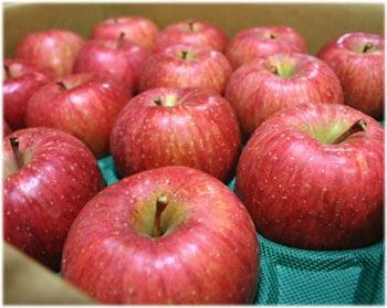11/30リンゴ