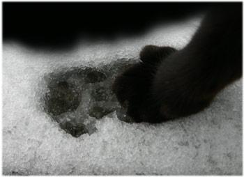 1/21肉球が雪で冷たいミルミル