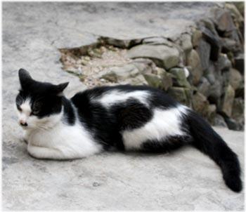 中国のネコ2