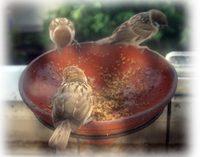 スズメの保育所