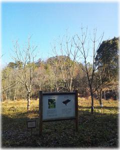 香川県森林センターの漆畑
