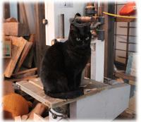 工房の猫 みるちゃん