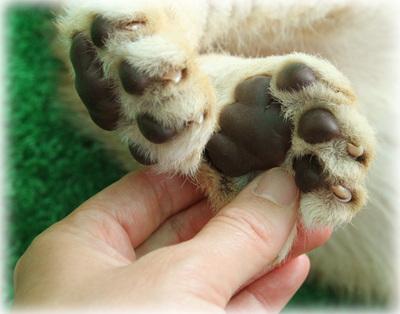 ライオン赤ちゃんの足