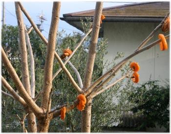 2/28漆の木とメジロのおやつ