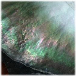 2/7 黒蝶貝の原貝の真珠層の輝き