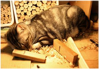 3/31木工作業台で眠るうり坊1