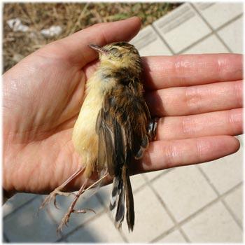 7/27ミルの小鳥