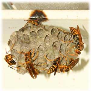 7/8ハチの巣2
