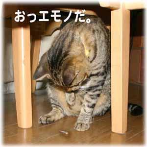 9/15むぎとシッポ1