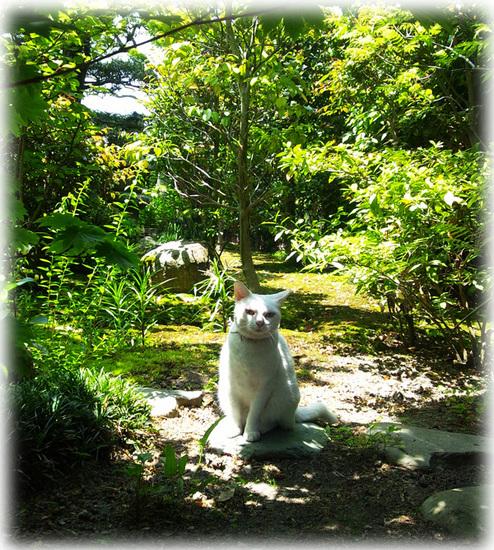 バラ園の猫