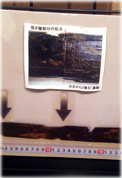 南鴻沼のウルシの木出土品