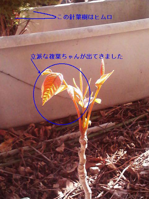 okyakusama_nae_2.jpg