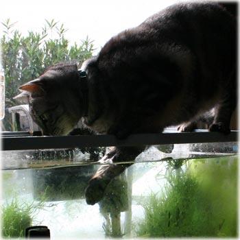 水槽とうり坊